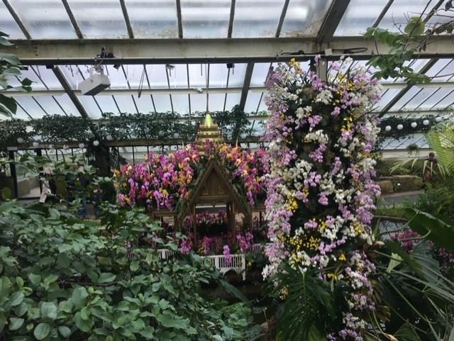 Orquídeas en Kew Gardens
